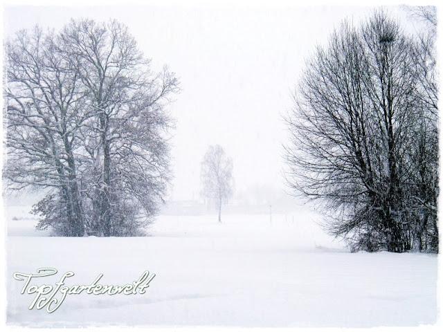 Gartenblog Topfgartenwelt Winter: Blick über die Felder vor dem Wallersee