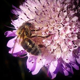 Entonces me pregunto: ¿Porqué en lugar de envenenar la ciudad no llenamos las ciudades de flores?¿Porqué no enseñamos a las personas a convivir con las abejas, a comprenderlas y que no les tengan miedo?¿ Porqué no mostrar a la gente lo importantes que son las abejas y que lo que comen se produce gracias a la polinización?.