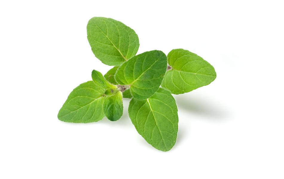 Indoor Gardening - My Aerogarden and Houseplant Blog