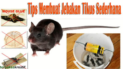 Cara ampun membuat jebakan atau perangkap tikus sendiri di rumah, cara membuat jebakan tikus ampuh, cara membuat perangkap tikus ampuh