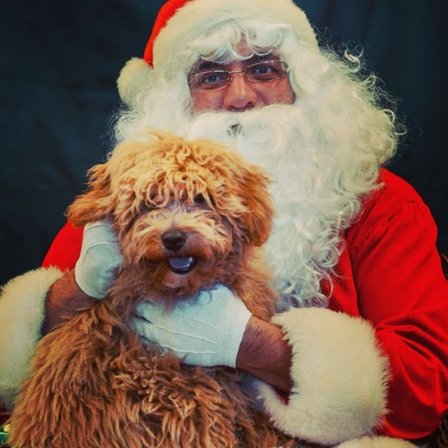 puppy pictures with santa