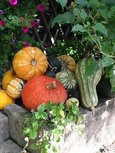 Herbstliches Dekorieren mit Kürbissen/Zierkürbissen