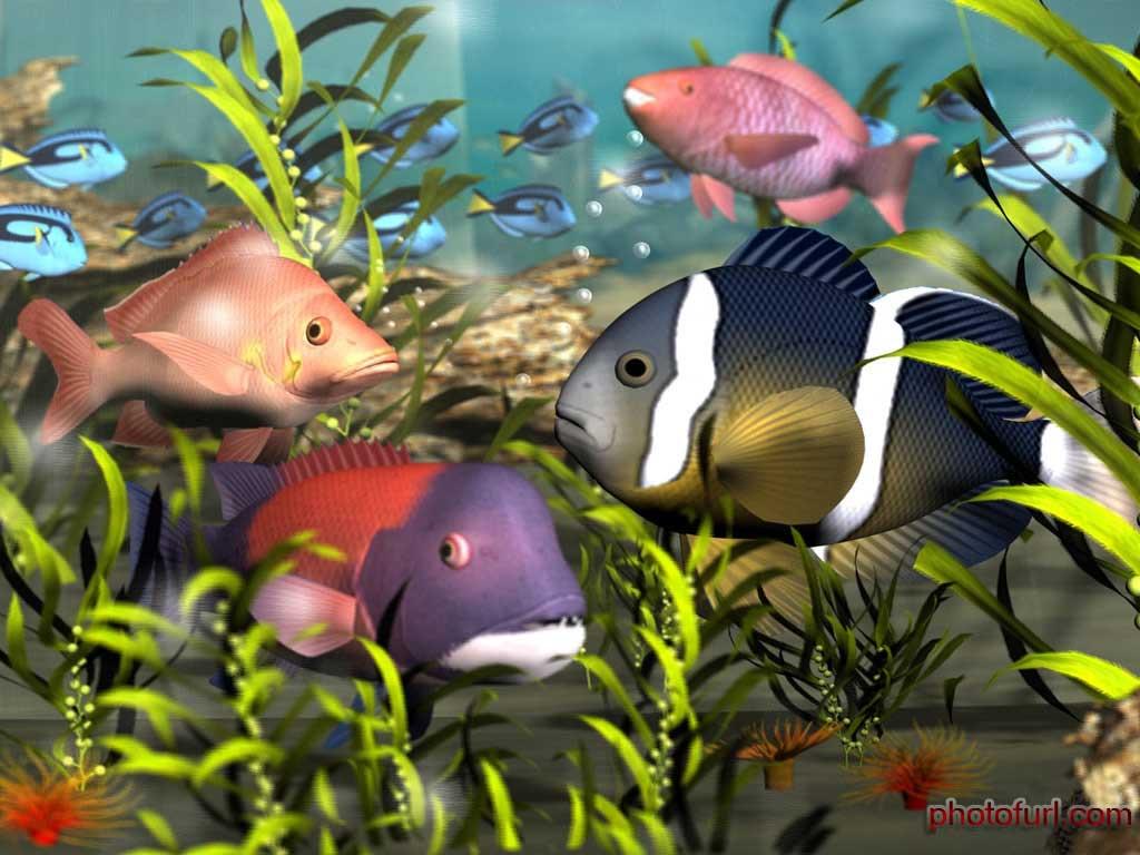 Koleksi Gambar Ikan Hias Cantik 2013   Gambar Keren dan ...