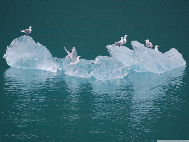 seagulls on an iceberg wallpaper