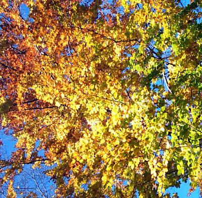 Illusztráció vershez, őszi lombok a fán, sárga, vörös, rozsdabarna, lilás és zöld levelek csillognak erős napfényben az őszi erdőben egy fa tetején.