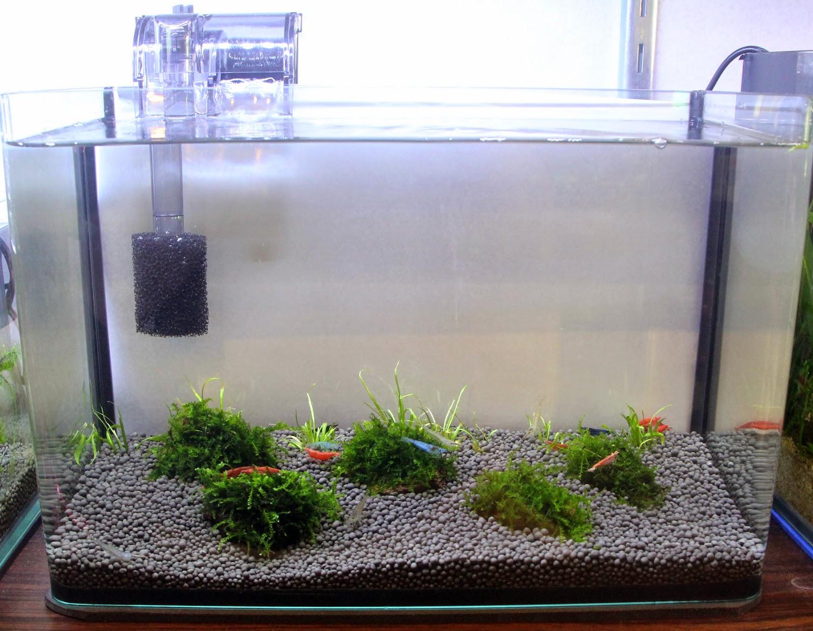 Plants Pond Filtration
