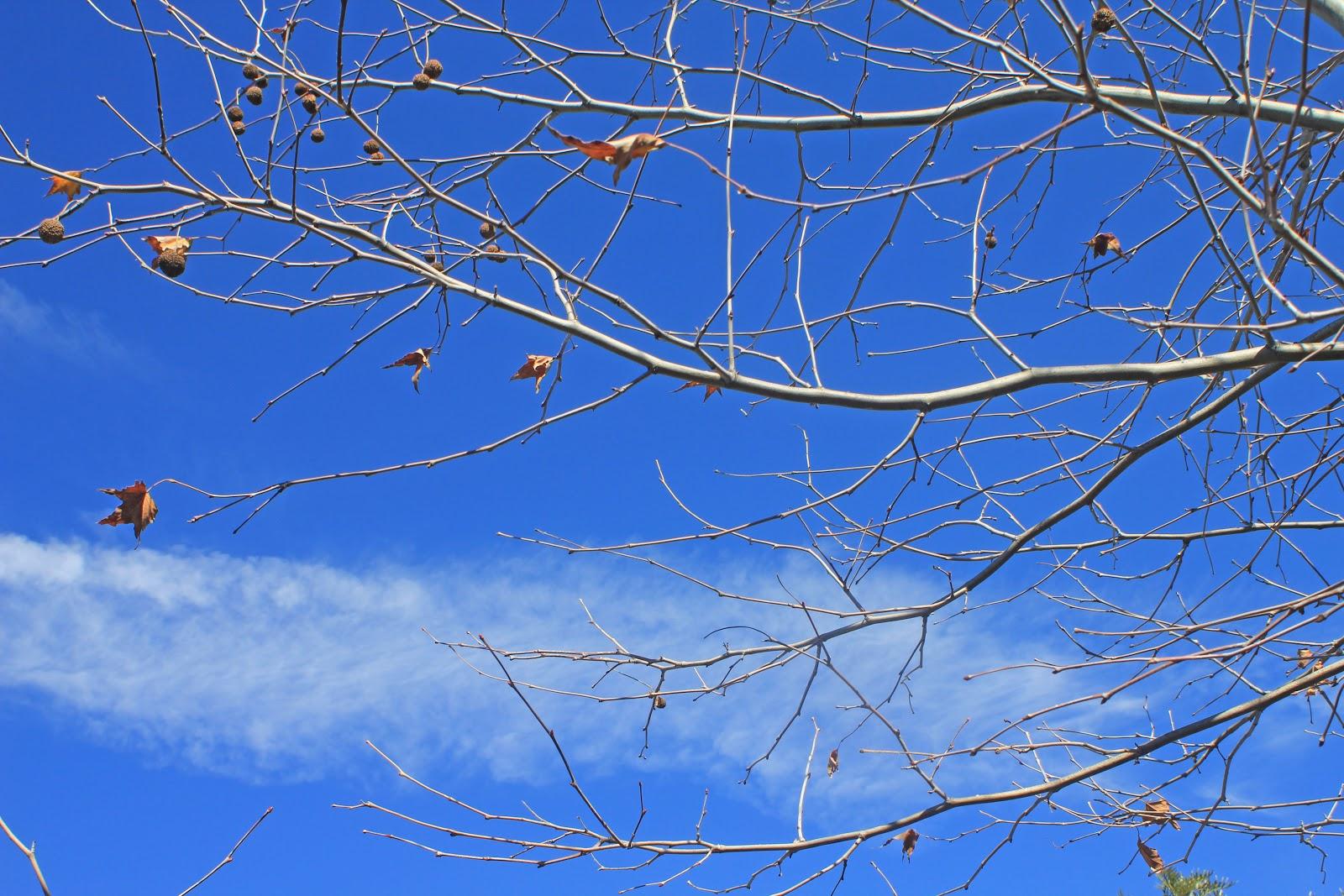 camissonia u0027s corner a winter u0027s tale in a southern california garden