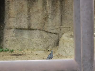 神戸市立王子動物園 鳩