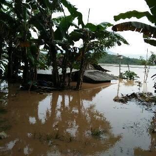 Banjir Rendam 1000 Hektar Sawah di Kabupaten Pringsewu