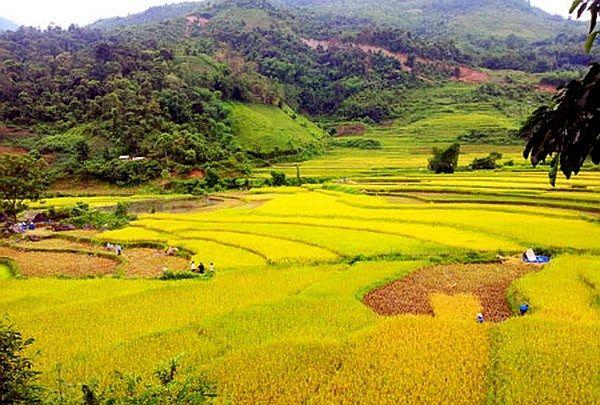 Kết quả hình ảnh cho Ruộng nương ở vùng thấp người Dao