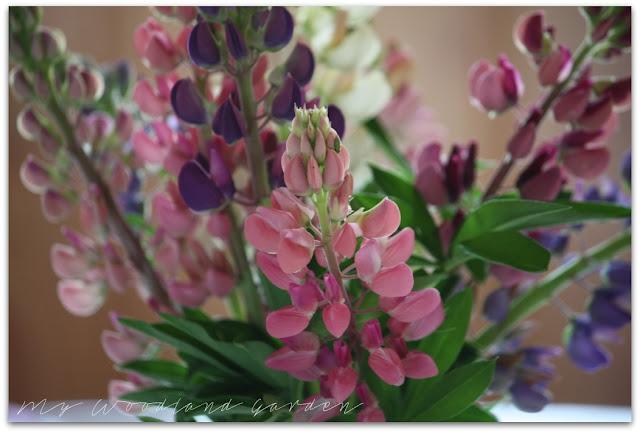 lupins flowers vase