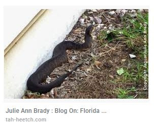 Website that stole Julie Ann Brady blog content