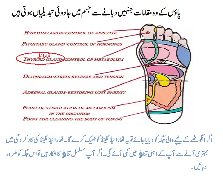 Thyroid Disease Ka Desi Ilaj Gland Urdu Helpline