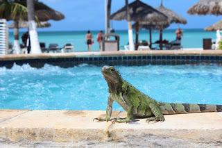 AMERICA: Aruba 1