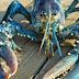 Duas raras lagostas azuis foram encontradas no Canadá