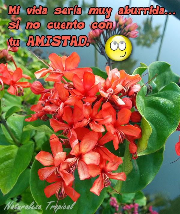 postal de amistad con flor tropical