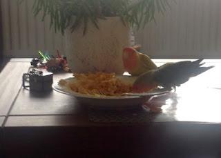 Coco en Zaza aan de pasta