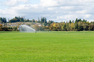 A field is irrigated.