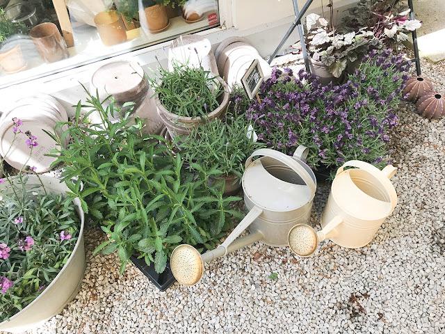 Trädgårdsinspiration: blommor och jätteverbena