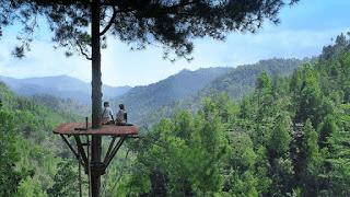 Hutan pinus kita pacitan