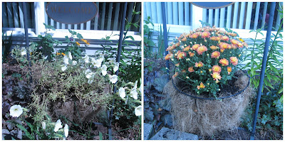 Before and after of my potted plants in the front yard.