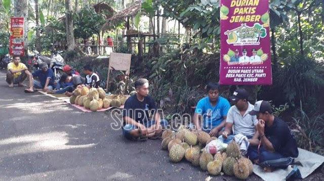 Kampung Wisata Durian Jember