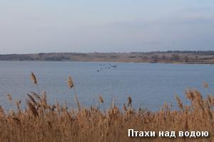 Птахи над водою