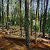 4 Alasan Mengapa Hutan Pinus Mangunan Jogja Memesona