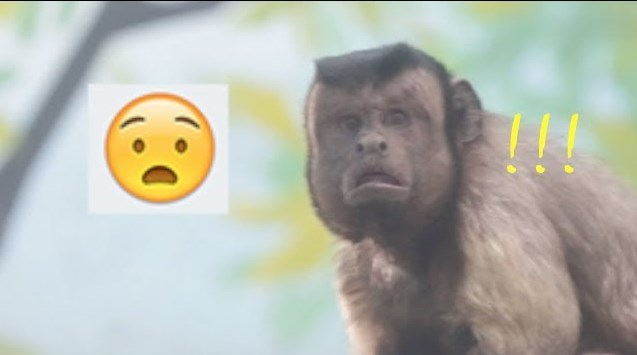 Monyet Berwajah Mirip Manusia Di Kebun Binatang Cina Kini Viral