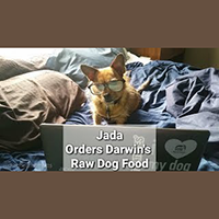Ordering raw dog food from Darwin's Natural Pet Products