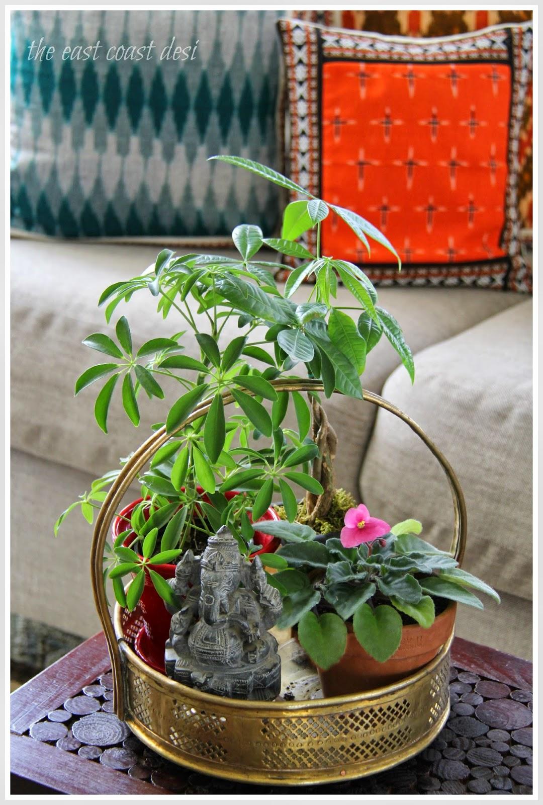 The East Coast Desi: My Portable Indoor Garden Oasis