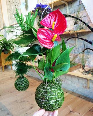 Giỏ cây, giỏ hoa treo mang lại không gian thú vị, lạ mắt