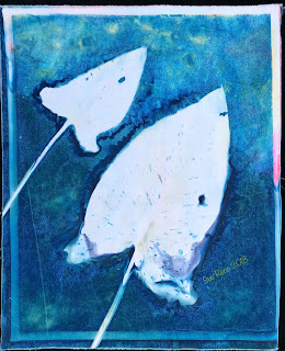 Wet cyanotype -Sue Reno_Image 510