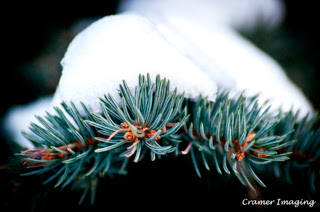Cramer Imaging's professional quality nature photograph of pine branches and needles covered with snow in Pocatello, Bannock, Idaho