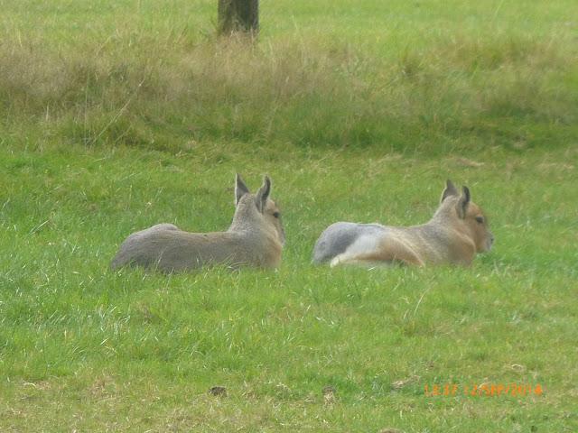Fota Wildlife Park Cork