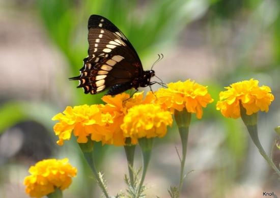 El jardinero plantas y flores jardiner a autosustentable for Jardinero definicion