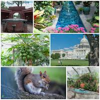 Capitol Hill, US Botanic Gardens