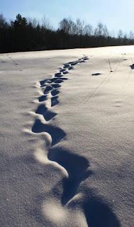 Snieg, Snieżny krajobraz, nieodkryte tereny