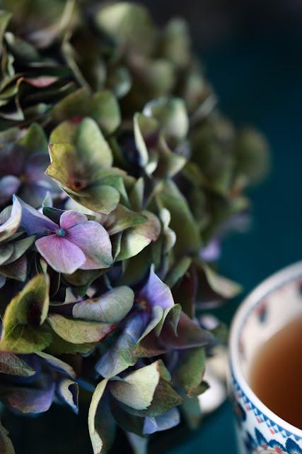 hortenssia, hydrangea, green coffee