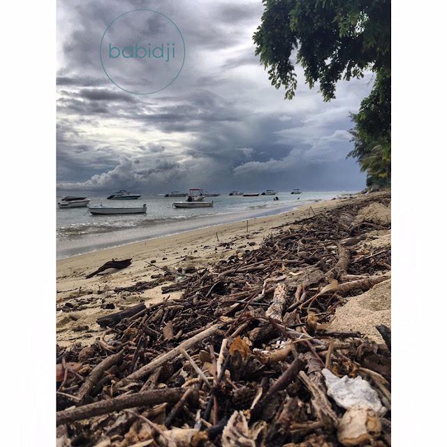 bois flotté sur la plage de La Preneuse Rivière Noire à l'Île Maurice