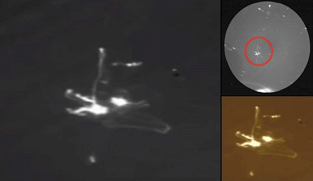 NASA Archive Unveils Transparent UFO next to Apollo 17 Spacecraft Ufo%2Bapollo%2B17%2Bspace%2Bmoon