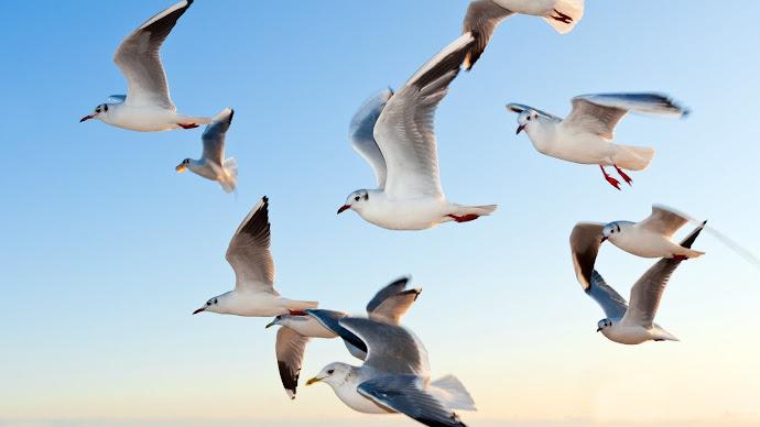 Wallpaper: Seagulls Above Ocean Waves
