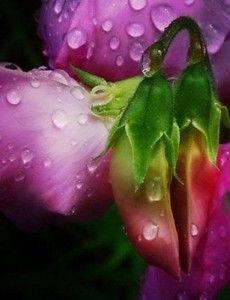 avis Honeysuckle & Sweet Pea Rain de Front Porch, blog bougie, blog beauté, blog parfum
