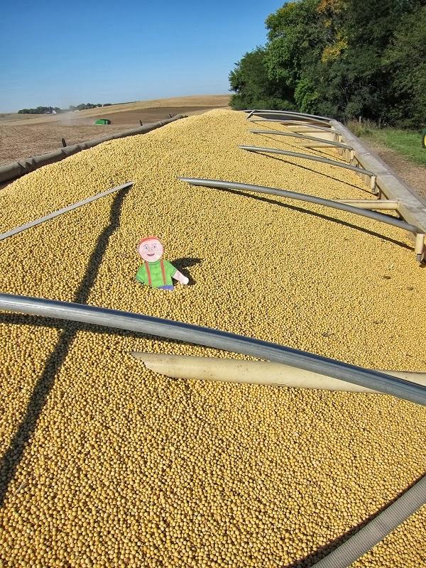 Tales of a Kansas Farm Mom: Flat Aggie travels back to Nebraska for