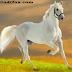Short Essay On Horse In Hindi - Ghode par Hindi Nibandh