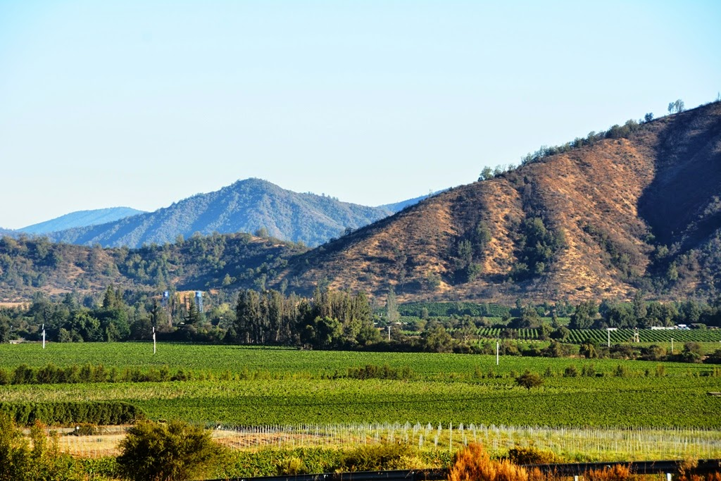 Casablanca wine region chile