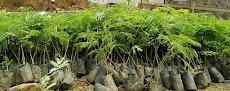 Cara mudah menghitung kebutuhan bibit tanaman saat kita memulai musim tanam