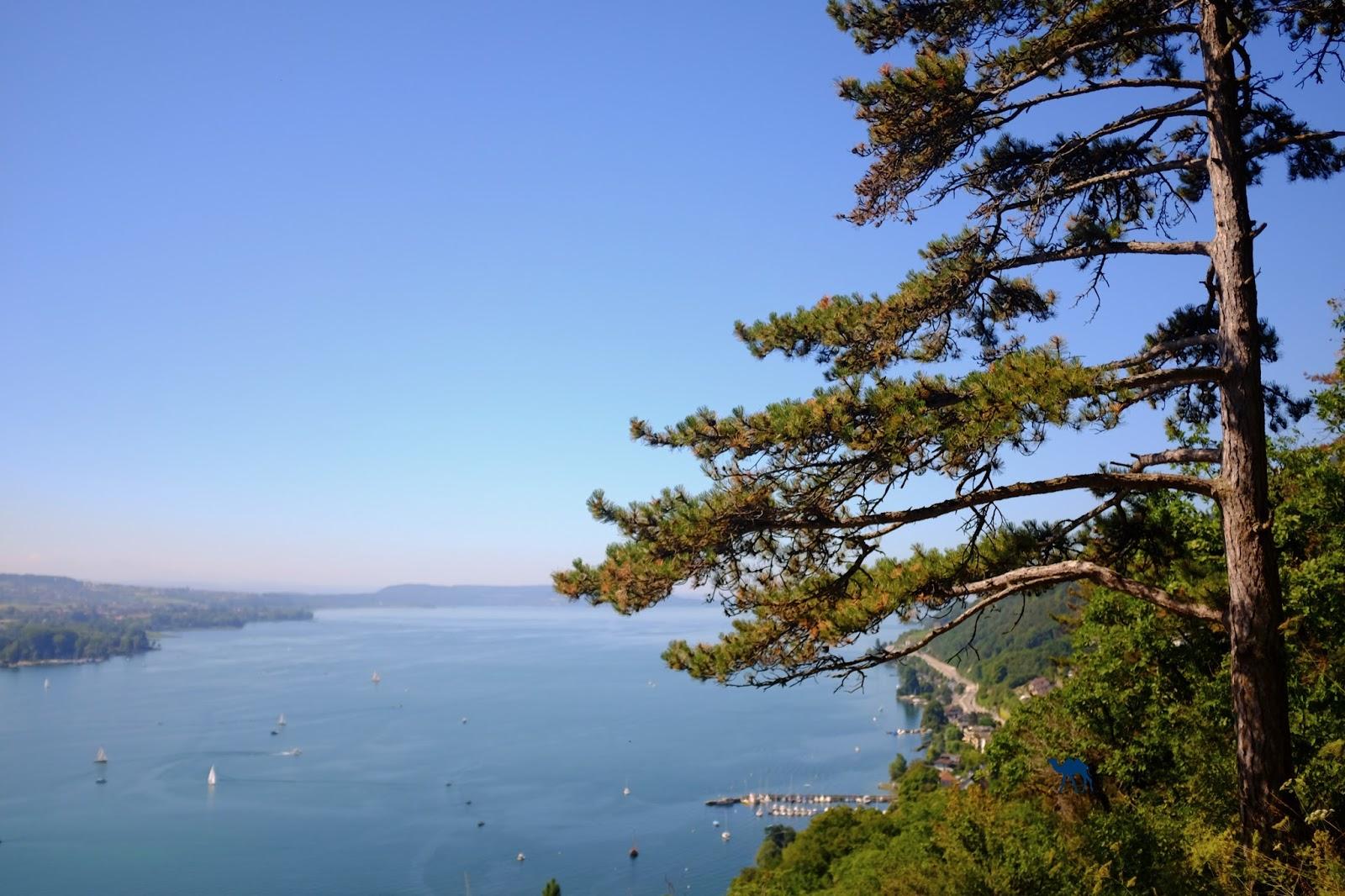Le Chameau Bleu - Bienne Tourisme Suisse LAC PADDLE ET VIN