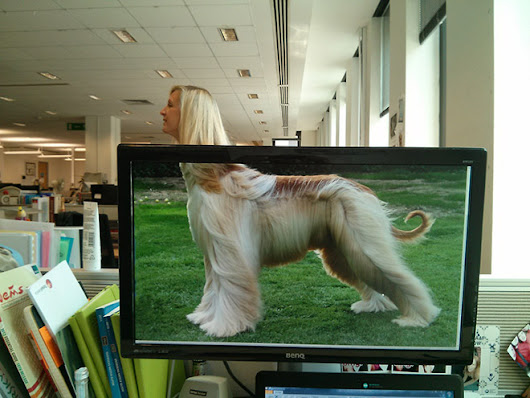 Employees Made Hilarious Office Safari