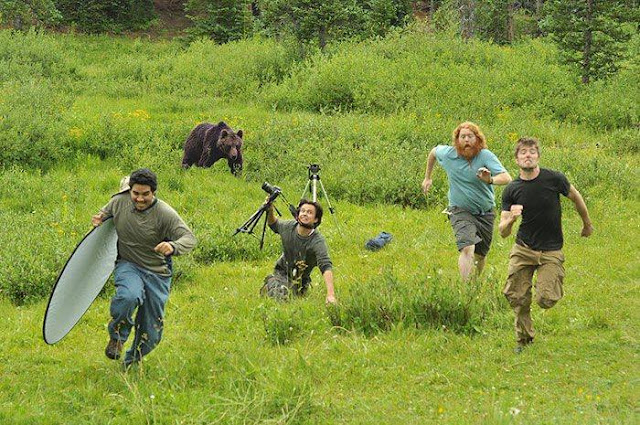 Crazy Photographers Bear